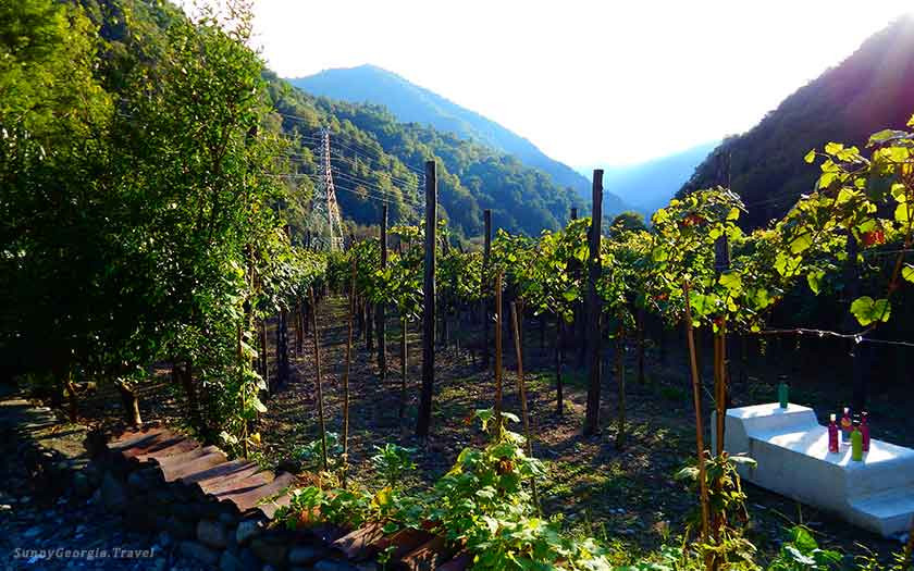 Travel to Mountainous Adjara (with tasting of local wines)