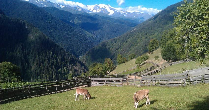 Svaneti. Better than the mountains can only be mountains that have not yet been!